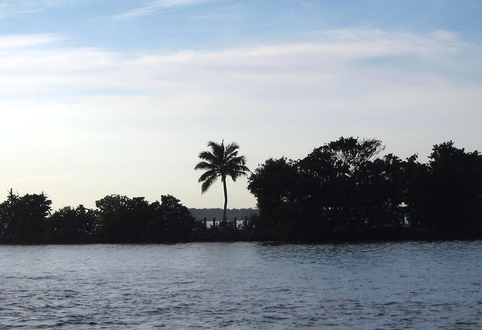 Silhouette of an island with a palm tree.