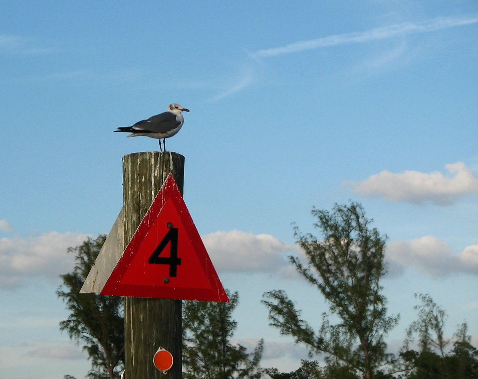 A sea gull on a channel marker : Free Stock Photo