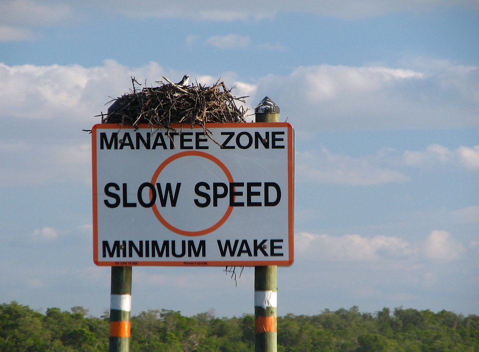An osprey nest on a speed warning sign in the ocean : Free Stock Photo