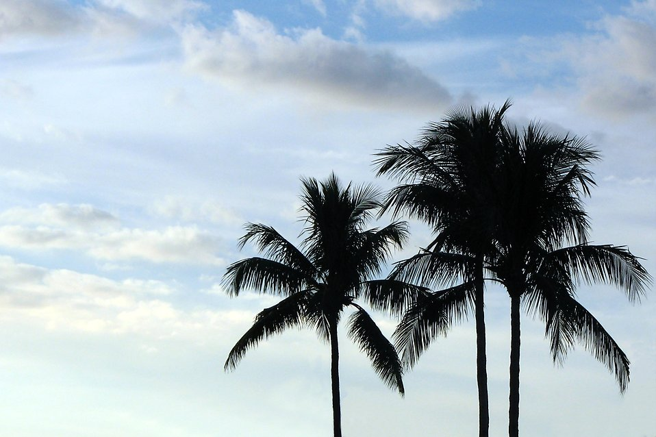 Palm tree silhouettes before a cloudy blue sky : Free Stock Photo