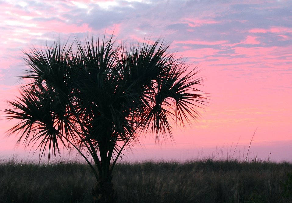 Silhouette of a palm tree before a sunset : Free Stock Photo