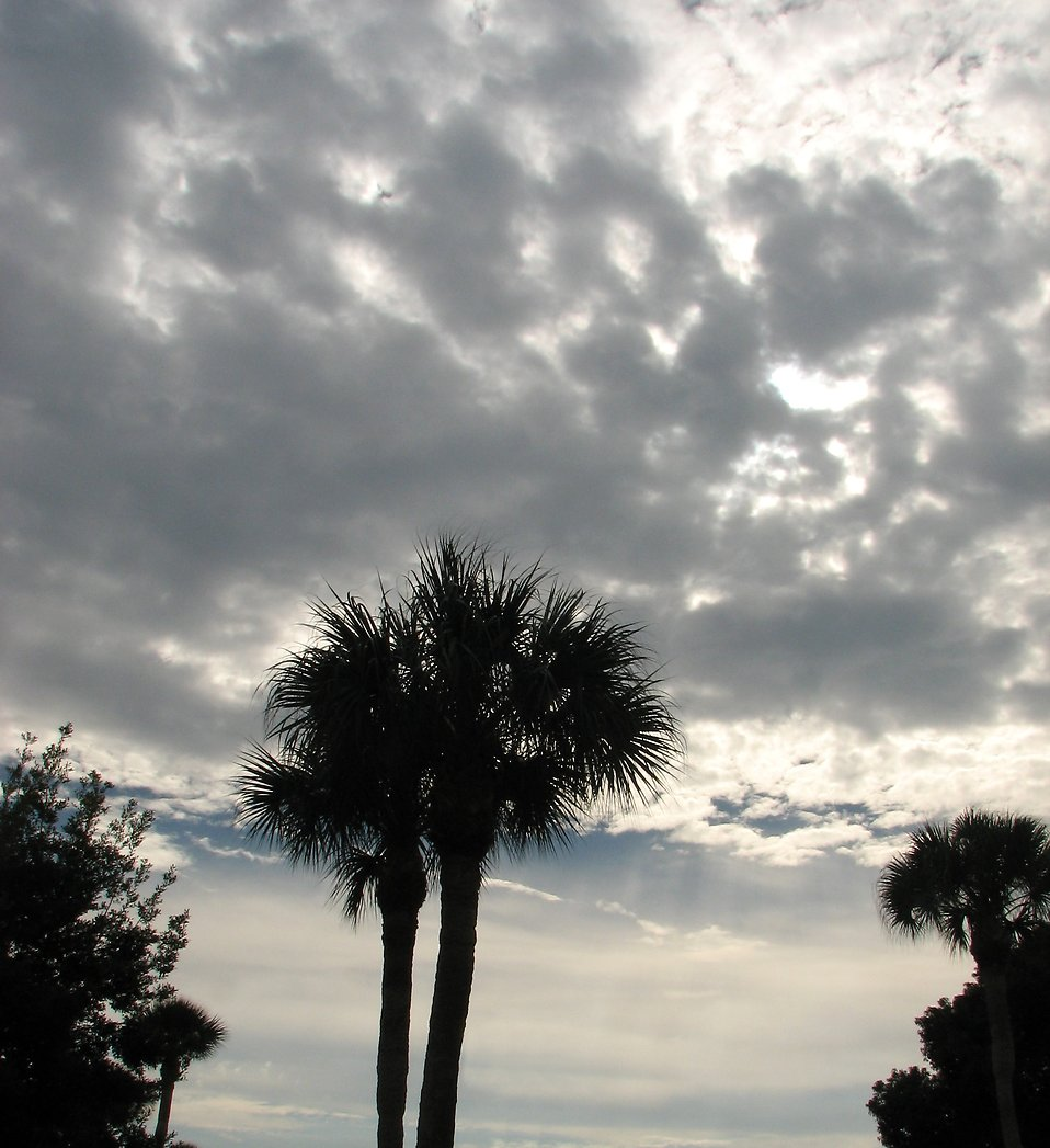 A palm tree with a cloudy sky : Free Stock Photo