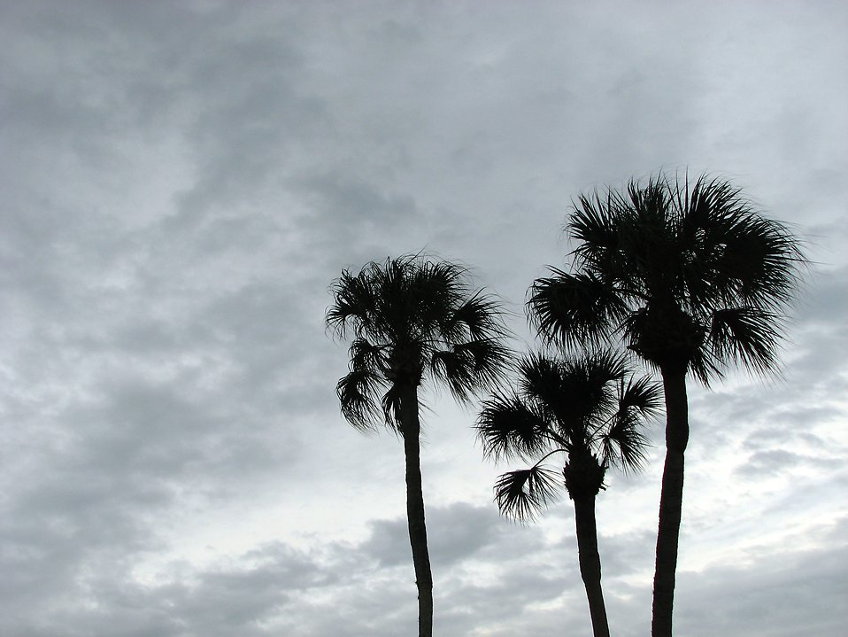 Palm tree siilhouettes before a cloudy sunset : Free Stock Photo