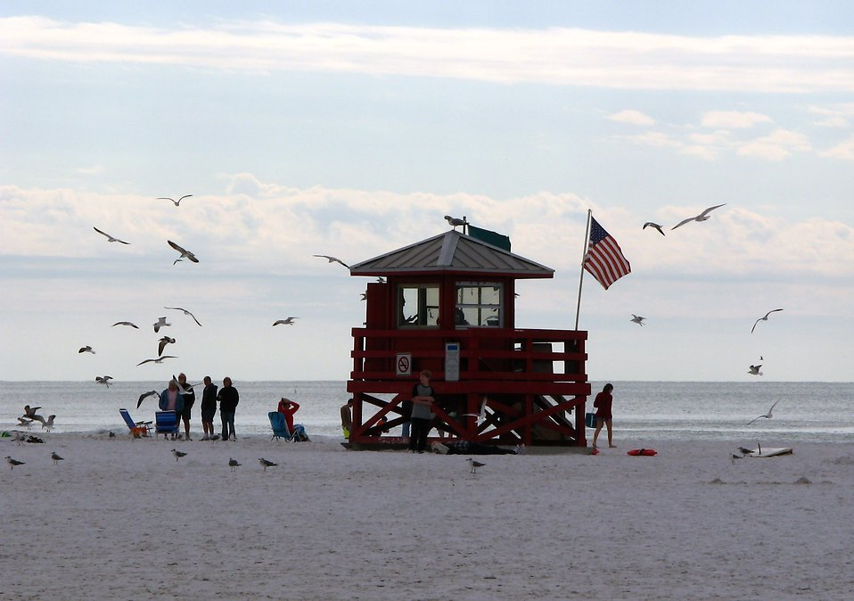 A lifeguard stand on the beach surrounted by seagulls : Free Stock Photo