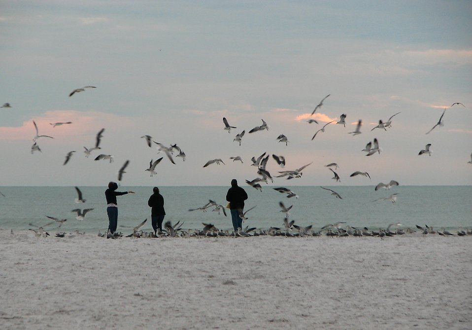 Seagulls flying around people on the beach : Free Stock Photo