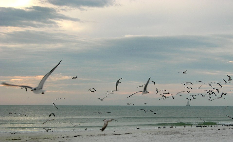 Seagulls flying over the beach at sunset : Free Stock Photo