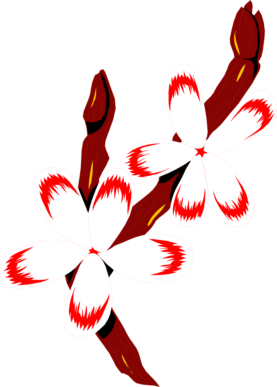 Illustration of red and white flowers on a branch : Free Stock Photo