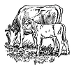 Free Stock Photo: Vintage illustration of a cow and calf grazing in a field