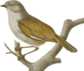 Free Stock Photo: Illustration of a bird perched on a branch