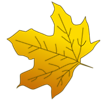 Free Stock Photo: Illustration of a yellow autumn leaf