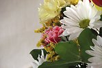 Free Stock Photo: Closeup of a flower bouquet