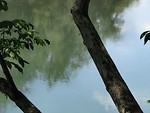 Free Stock Photo: A still river