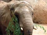 Free Stock Photo: Elephant portrait