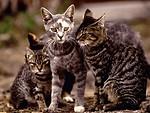 Free Stock Photo: Cats