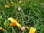 Free Stock Photo: Closeup of yellow flower