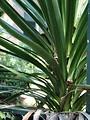 Free Stock Photo: Tropical plant