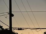 Free Stock Photo: Power lines