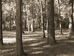 Free Stock Photo: Creepy woods