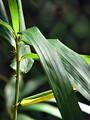 Free Stock Photo: Closeup of a plant