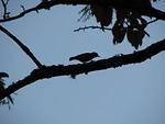 Free Stock Photo: Bird silhouette