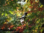 Free Stock Photo: Street lamp with autumn leaves