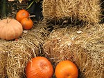 Free Stock Photo: Pumpkins on straw bales