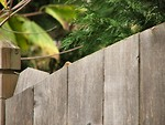 Free Stock Photo: Wooden fence