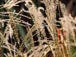 Free Stock Photo: Closeup of tall grass