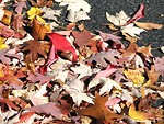 Free Stock Photo: Pile of autumn leaves