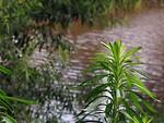 Free Stock Photo: A calm river