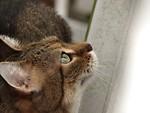 Free Stock Photo: Closeup of cat looking up