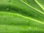 Free Stock Photo: Closeup of green leaf with water
