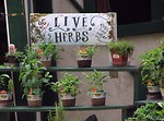 Free Stock Photo: Potted plants at herb shop