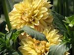 Free Stock Photo: Closeup of yellow flowers