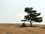 Free Stock Photo: Single tree at the top of Stone Mountain