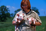 Free Stock Photo: A researcher holding a pair of 10 day old piglets