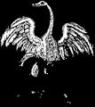 Free Stock Photo: Illustration of a bird engraving