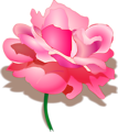 Free Stock Photo: Illustration of a pink rose