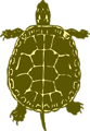 Free Stock Photo: Illustration of a turtle