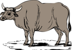 Free Stock Photo: Illustration of a gaur