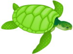 Free Stock Photo: Illustration of a green sea turtle