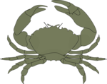 Free Stock Photo: Illustration of a crab