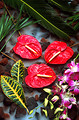 Free Stock Photo: Orchids and anthurium flowers