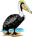 Free Stock Photo: Illustration of a pelican