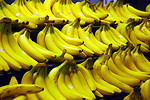 Free Stock Photo: Bunches of yellow bananas