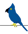Free Stock Photo: Illustration of a blue parrot