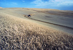 Free Stock Photo: Wheat harvest in a field on the Palouse