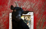 Free Stock Photo: A black goat sticking its head through a barn window