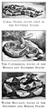 Free Stock Photo: Vintage illustrations of various poisonous snakes
