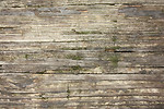 Free Stock Photo: Close-up of wood grain with moss